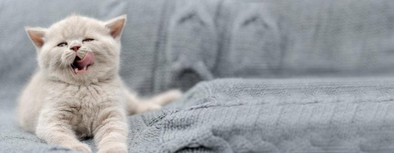 Catalysis protege la salud de tus Mascotas