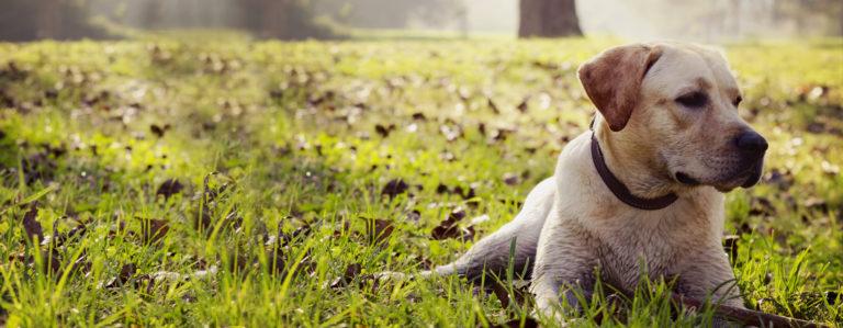 Catalysis Mascotas